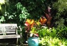 Beltana Tropical landscaping 11