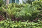Beltana Tropical landscaping 2