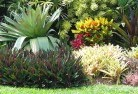 Beltana Tropical landscaping 9